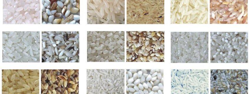 rice_colour_sorting_machine_by_metak