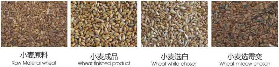 Metak_Wheat_color_sorter_machine