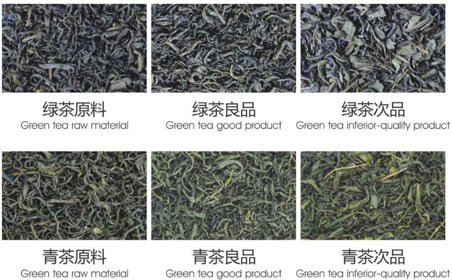 Metak_green_tea_sorting
