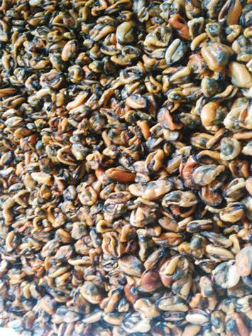 Mussel Meat Color Sorter_2