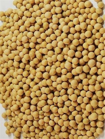 Soybean Color Sorter_2