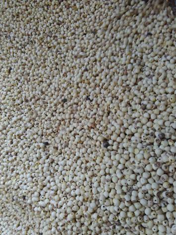 lotus-seed-material